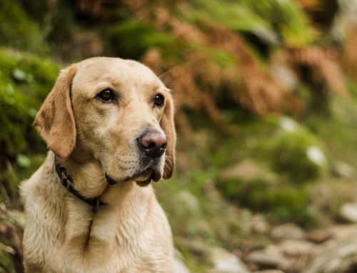 5 Tips to Protect Your Pet from Lyme Disease