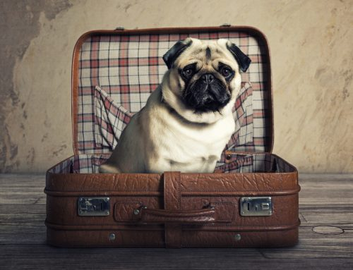 5 Tips on Traveling With Your Pet Over the Holidays