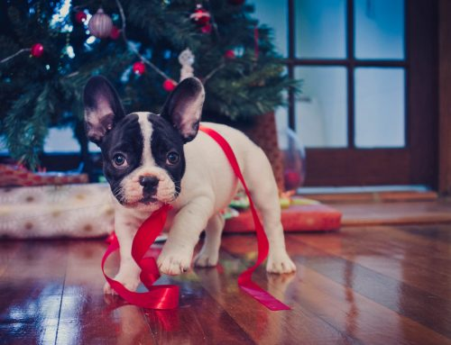 4 Reasons Why Pets Do Not Make Good Holiday Gifts and What to Give Instead