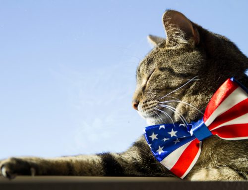 5 Tips for July Fourth Pet Safety