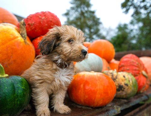 Top 5 Tips For Keeping Pets Safe During a Howling Good Halloween